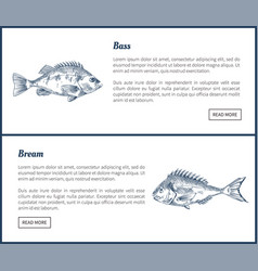 Bass and bream seafood set vintage icons vector