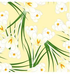 White crocus flower on beige ivory background vector