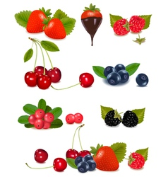 berries and cherries vector image vector image