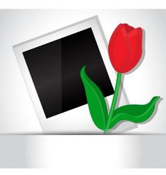 Photo and tulip vector image