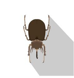 Beetle rhinoceros bug rhino silhouette nature vector