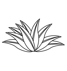 Plant leaves tropical nature botanical outline vector