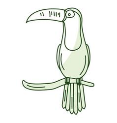 Toucan in branch tropical bird icon vector