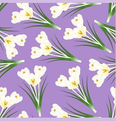 White crocus flower on light purple background vector