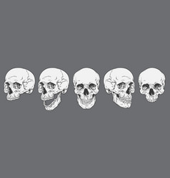 anatomically correct human skulls set isolated vector image vector image