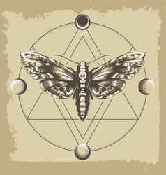 deaths head hawk moth in esoteric astrological vector image