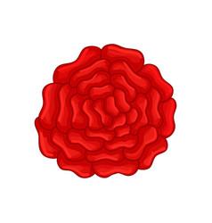 Floral botanical flower color ornament rose vector