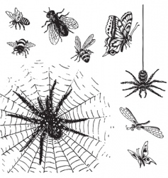 set antique insects engravings vector image