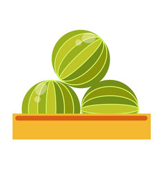 box with big ripe watermelons isolated cartoon vector image vector image