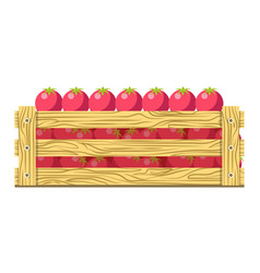 ripe fresh tomatoes in wooden box isolated vector image