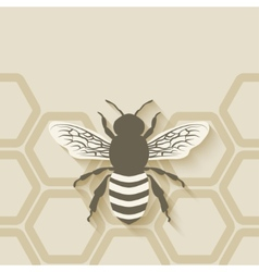 bee honeycomb background vector image