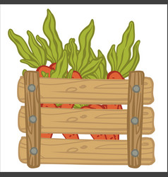 carrots with leaves in wooden rustic basket vector image