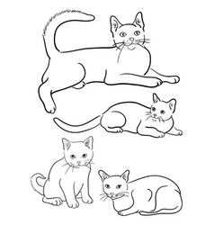 cats line on a white background vector image