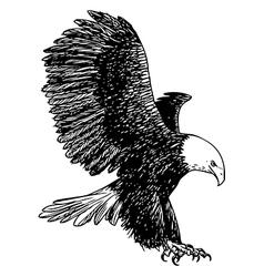 Eagle 6 vector image