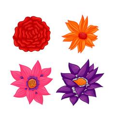 floral botanical flower ornament color set vector image