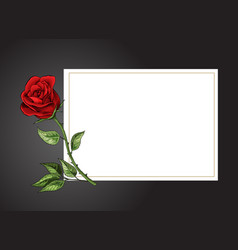Rose single flower on white background with black vector