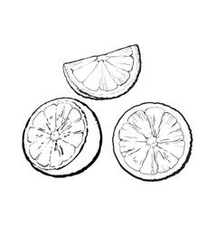Set of hand drawn orange half slice and segment vector