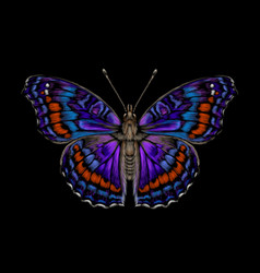 tropical butterfly color realistic drawn vector image