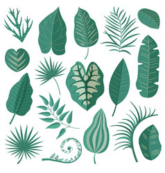 tropical leaves collection set vector image