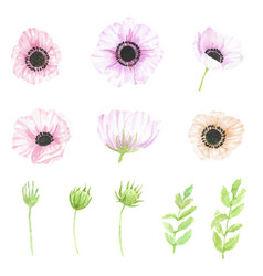 Watercolor hand drawn anemone flower elements vector