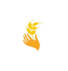 wheat logo design grain vector image