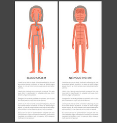 Blood and nerve systems set vector