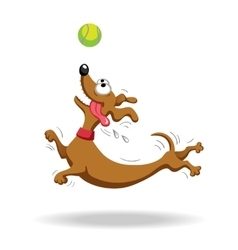 Dachshund dog playing with tennis ball vector