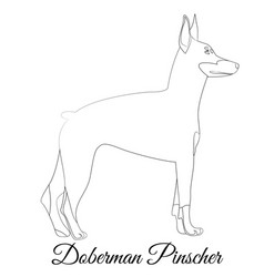 Doberman pinscher dog outline vector