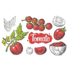 set hand drawn tomatoes isolated on white vector image