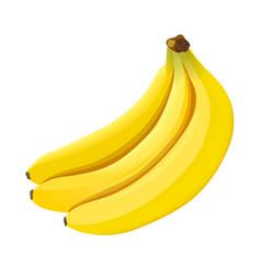 banana ripe bananas isolated on white background vector image