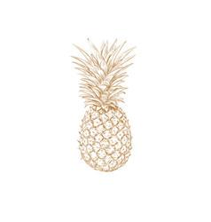 pineapple sketch pineapple vector image vector image