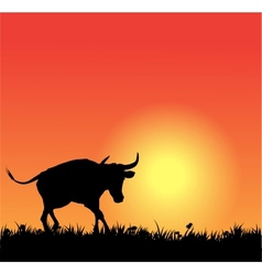 bull silhouette on sunset vector image vector image
