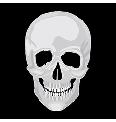 scull human vector image
