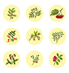 wild berries set vector image