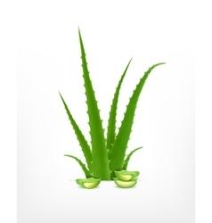 Aloe with aloe slice vector