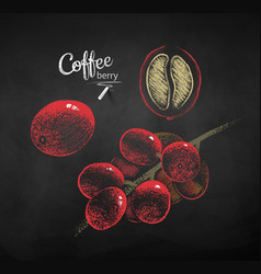 Chalk drawn sketches set of coffee branch vector
