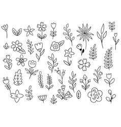 Collection forest fern eucalyptus art foliage vector