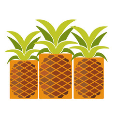 tropical ripe pineapples with long leaves isolated vector image