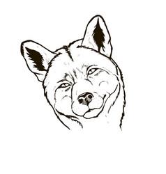 fox portrait close-up vector image