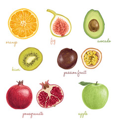 Hand drawn detailed exotic fruits vector