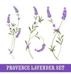 Set of lavender vector image