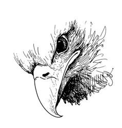 eagle bird doodle hand drawn vector image vector image