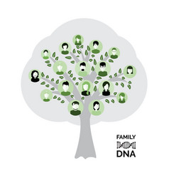 Genealogy tree for dna ancestors isolated vector