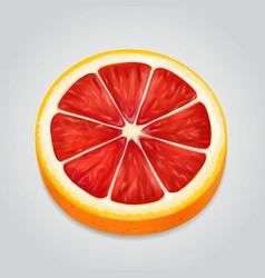 grapefruit fruit slice realistic 3d vector image vector image