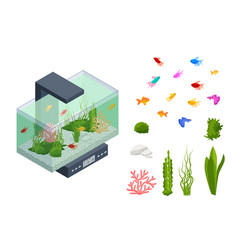 isometric goldfish in freshwater aquarium and vector image