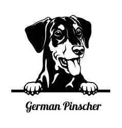 Peeking dog - german pinscher breed - head vector
