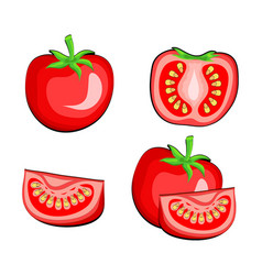 set of tomato vegetables half and slice hand draw vector image