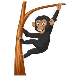 cartoon bachimpanzee hanging in tree branch vector image