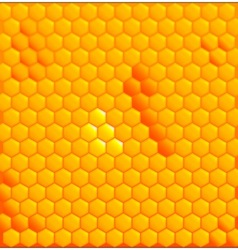 Honey Cells vector