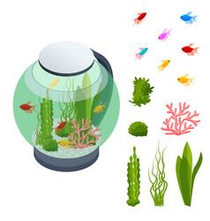 isometric goldfish in freshwater aquarium and vector image